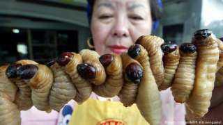 حظر أكل لحوم القطط والكلاب فى الصين