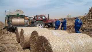 «الزراعة» و«البيئة» تتابعان جمع وتدوير قش الأرز في كفر الشيخ