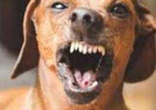 كلب مسعور بالعامرية في الإسكندرية يصيب 37 شخصا بعد عقرهم